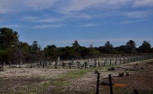 A lone leper graveyard