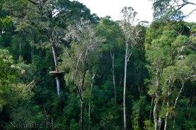 The-Tsitsikama-canopy