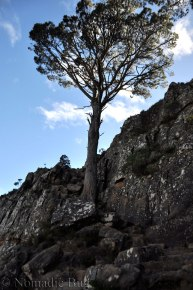 mountain tree