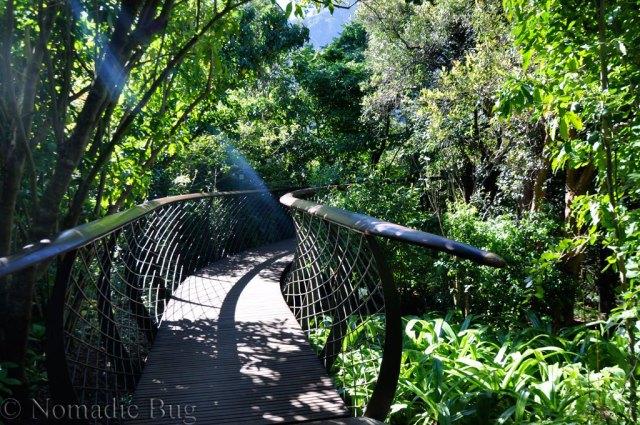 Kirstenbosch,boomslang