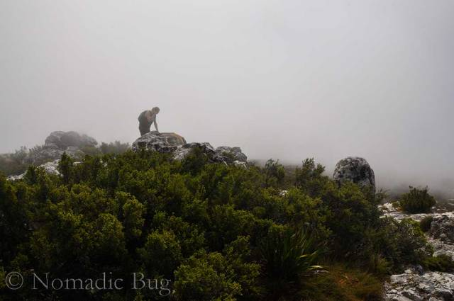 Gorilla in the mist. Photograph by Nomadic Bug, Nomadic Existence