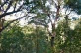 Canopy-Zipline