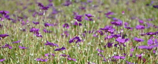 All in purple