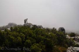 Gorilla-in-the-mist